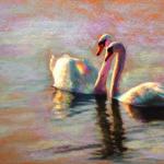 Swans by Kim Werfel